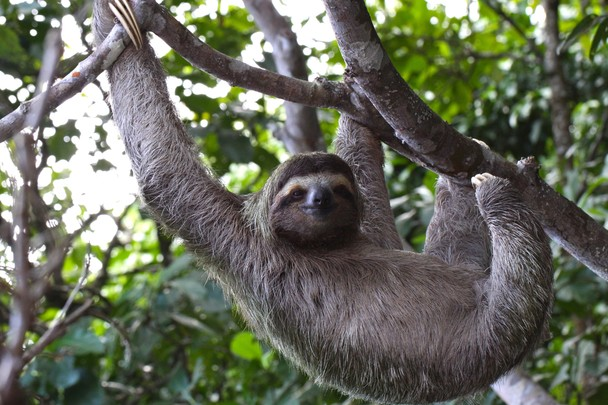 how to say sloth in spanish