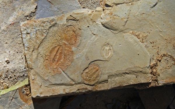 trilobite 2