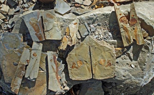 trilobite 5